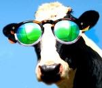 Vaca Tatá - bovina baiana