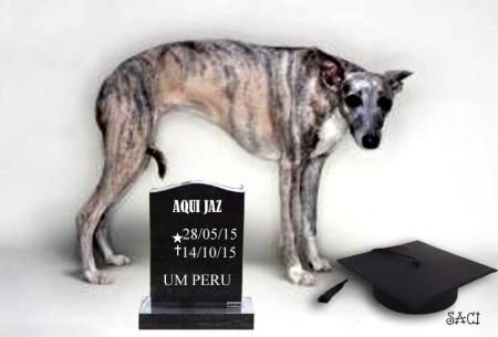 cão chutado
