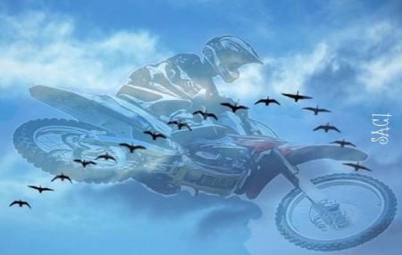 motos e passaros